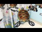 Turtle|LionFish|ButterFlyFish|Augmented Reality